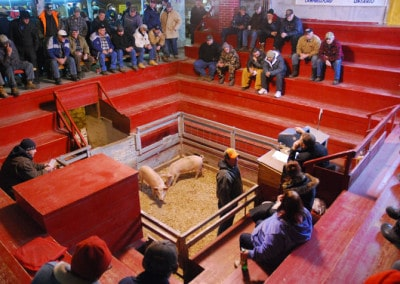 Hoards Station Salebarn, Livestock auction