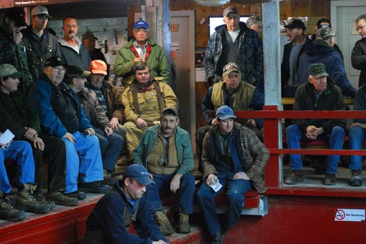 Sale Barn | Hoards Station Livestock Auction Ontario